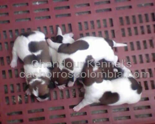 Cachorro disponible